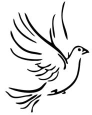 pi5dxxbi9-dove